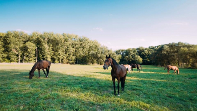 horses on the grass